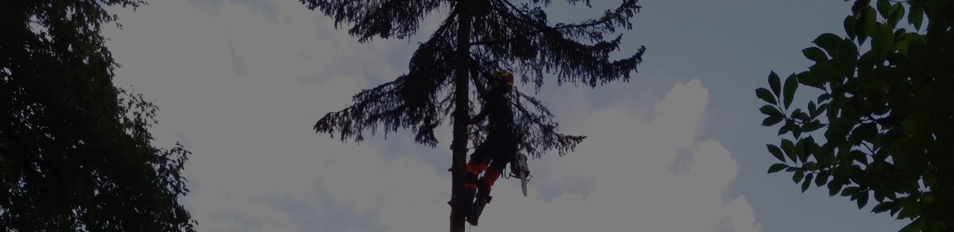 Pielęgnacja krzewów