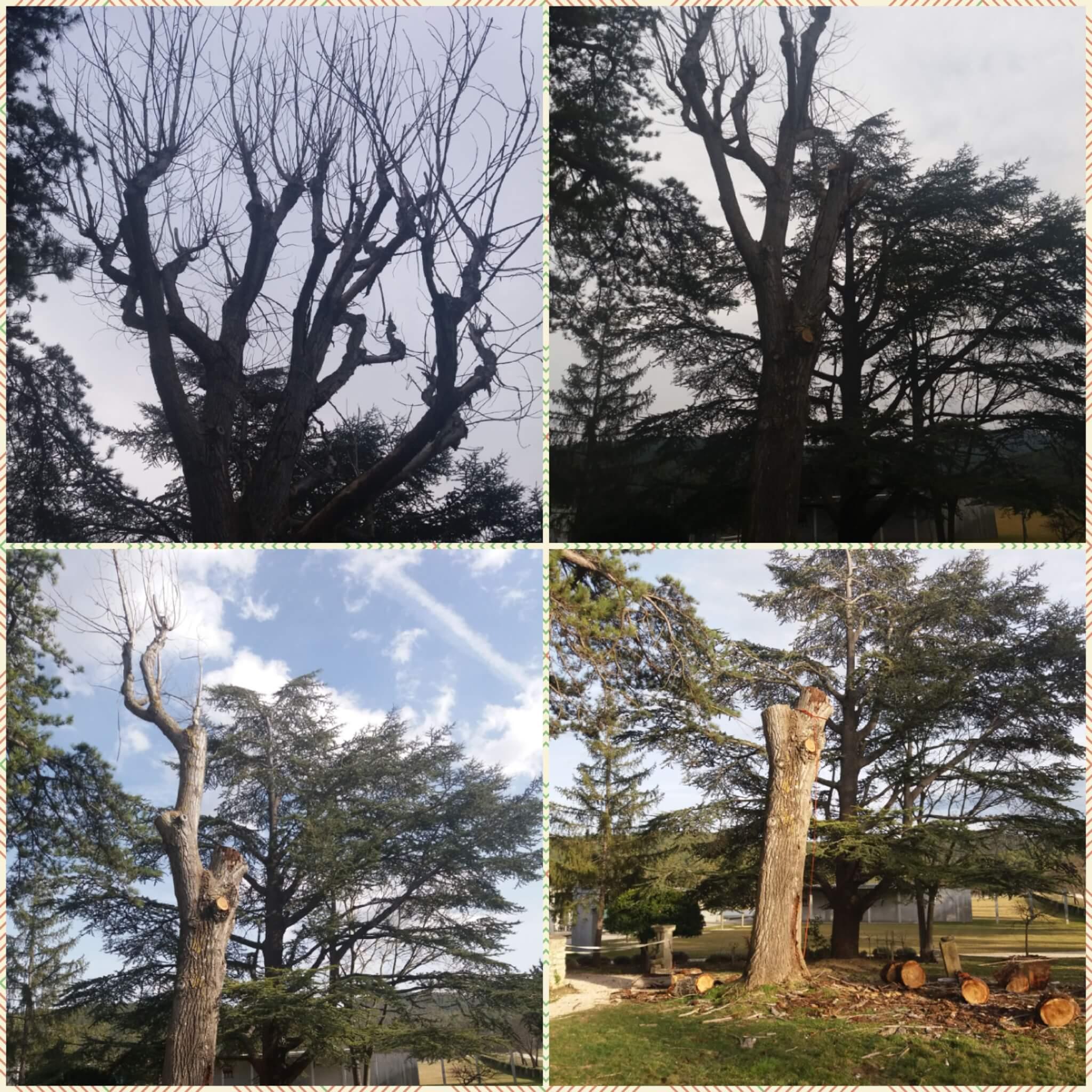 Trudne drzewa do wycinki