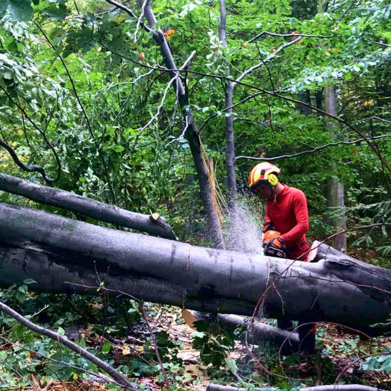 wycinka-drzew-bielsko-2