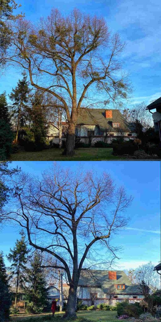wycinka-drzew-bielsko-4